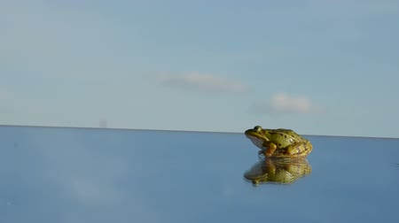 kavramsal : green frog jump on mirror and hand