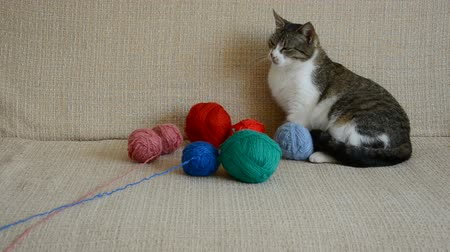 závit : cat on the divan playing with thread balls