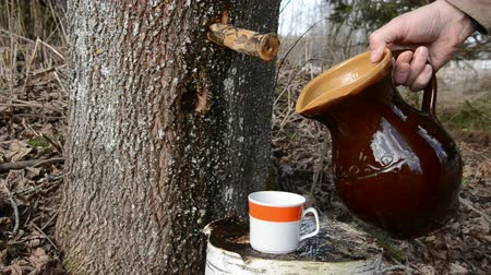 sirup : sweet and fresh  maple sap pour in the cup