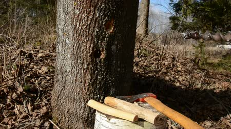 sirup : spring maple sap works