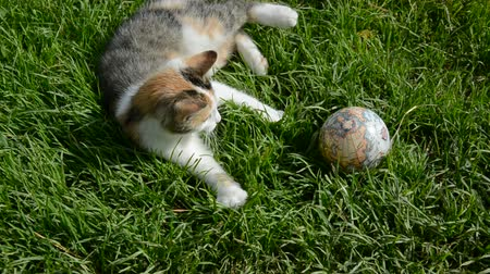kotki : young cat playing with earth globe on garden grass Wideo