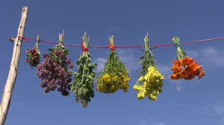wildstrawberry : hanging various fresh medical herb bunch on string and sky background Stock Footage