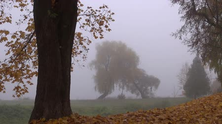 enevoado : early morning autumn park landscape with tree and mist