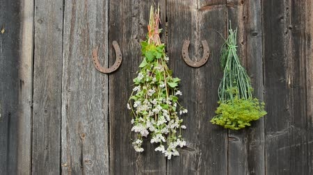 istálló : hanging medical and spice herbs bunch on old wooden wall