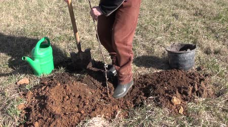 pomar : worker in farm orchard planting young apple tree sprout