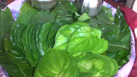 betel : Stack of Betel leaves (Piper Betle) in big plate , Mumbai market, India