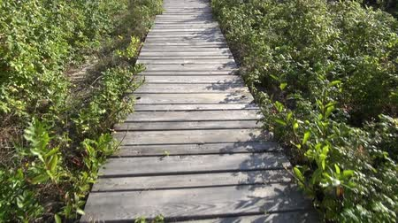 yolları : walking on wooden path way in resort forest near sea Stok Video
