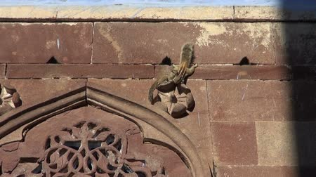 indian squirrel : group indian palm squirrel on decorative house wall in Jodphur, Rajasthan