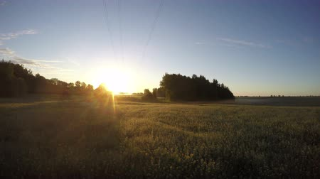 morning : beautiful summer sunrise on farm field with morning mist fog and clouds motion. Timelapse 4K Stock Footage