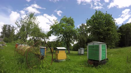 mel : wooden beehive group and old rusty horse rake in summer farm garden. Timelapse 4K