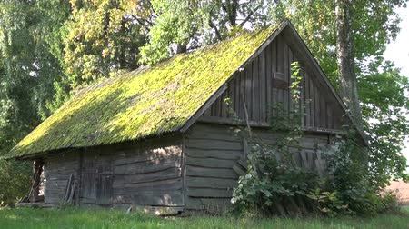 log cabin : Old desolate wooden  farm barn with mossy roof in countryside