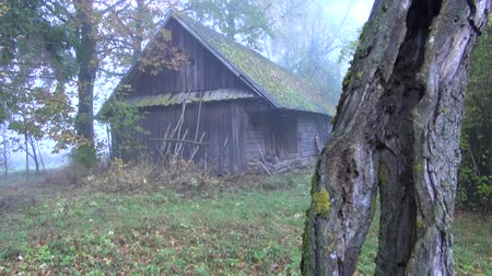 abandoned old : Old desolate wooden building barn in rural area with old apple tree trunk in autumn mist