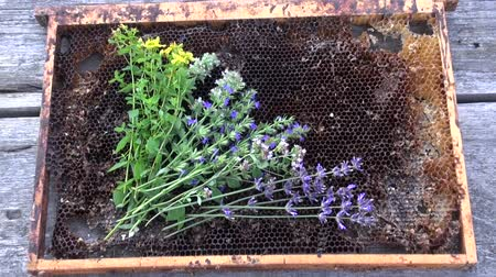 melissa officinalis : Various freshly picked herbs placed on old honeycomb