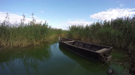 küçük sandal : Old wooden boat between green reeds growing in sea bay on summers day, time lapse 4K