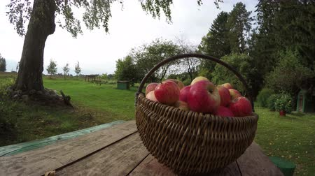 autumns : Wicker basket full of ripe apples on table in homestead on sunny cloudy autumns day, time lapse 4K