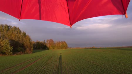 autumns : Landscape with red turning umbrella and a shadow cast on young green wheat field by the forest on sunny cloudy autumns day