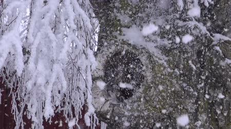 ramos : Old birch stump with a hole and snowfall