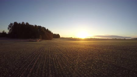 autumns : Landscape with sunrise on young wheat field in early autumns morning by the forest, time lapse 4K Stock Footage