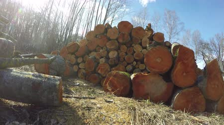 recentemente : Stack of recently cut orange alder tree logs on sunny cloudy early spring day, time lapse 4K