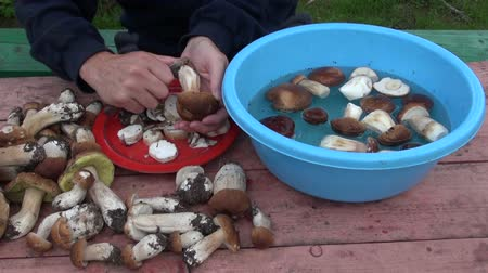 boletus edulis : Man cleaning foraged Boletus edulis mushrooms with knife Stock Footage