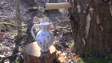 perverso : birch sap in spring dripping from wooden spigot in decorative ceramic jug