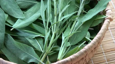 homeopathic : Rotating in wicker basket medical healthy sage leaves