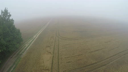 Литва : Drone fly height over summer end early morning misty crop fields, aerial view Стоковые видеозаписи