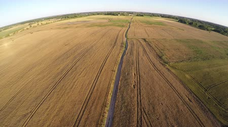 Литва : Aerial view from drone over ripe summer end crop field in sunny evening Стоковые видеозаписи