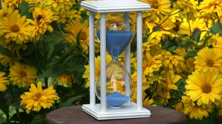 sandálias : White hourglass sandglass with blue sand motion in summer garden with yellow flowers, summer time still-life
