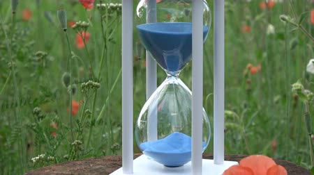 sandálias : Hourglass with blue sand motion  and  poppy blossoms in garden