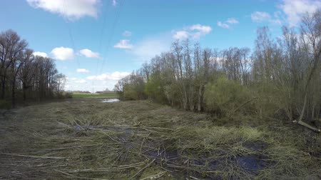 powerline : High voltage electricity line and cut trees in spring forest, time lapse
