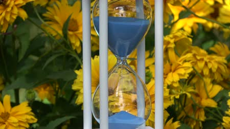 sandálias : Blue sand falling flow in new white wooden hourglass sandglass and flowers background in garden