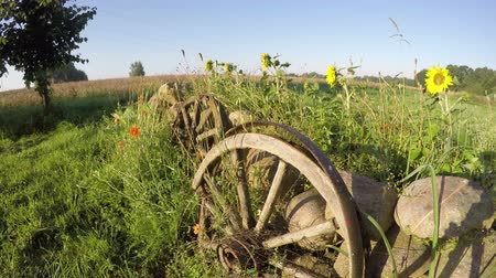 vég : Morning shadows in summer end and decorative fence with stones, wheels and flowers in farm, time lapse Stock mozgókép