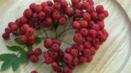 sorbus : Rotating in wooden plate red rowan berries in autumn