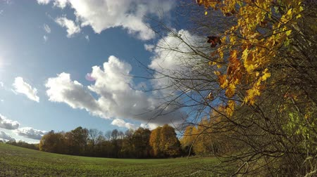 пастораль : Autumn farmland landscape with field and trees and clouds motion, time lapse Стоковые видеозаписи
