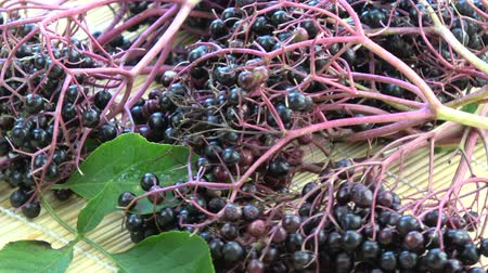 mürver : Rotating black elder Sambucus nigra medical berries on bamboo mat