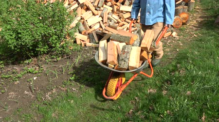 woodcut : Transporting fresh raw firewood for dry with wheelbarrow in farm