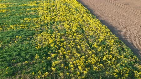 furrow : Beautiful spring time farmland fields, aerial view
