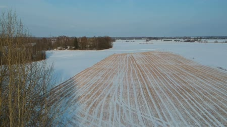 Drone fly above winter  farm field with wheat stubble in snow and bushes, aerial view Stockvideo