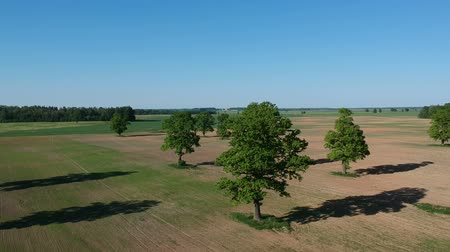 oak : Drone fly high up over farmland field with old oaks in spring, aerial Stock Footage