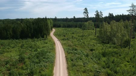 Summer gravel road in forest, aerial view Stockvideo