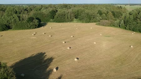 rotoballe : Harvested summer time farmland meadow with hay bales on field, aerial view Filmati Stock