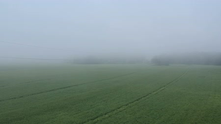 Misty early morning  ripening rapeseed fields, aerial view Stockvideo