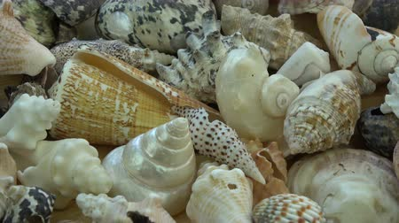 muszla : Various sea shell collection rotating background Wideo