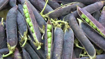 pea pods : violet pea pods rotating food background Stock Footage