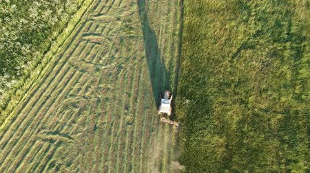 Old small tractor in morning cut mowing haymaking hay grass on meadow, aerial view Stockvideo