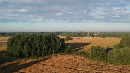 ポッド : Ripe pea fields in summer end morning and high electricity line, aerial view