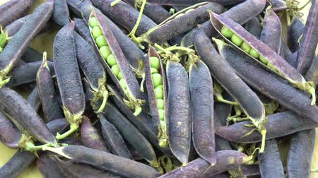 pea pods : Rotating fresh violet pea pods food background Stock Footage