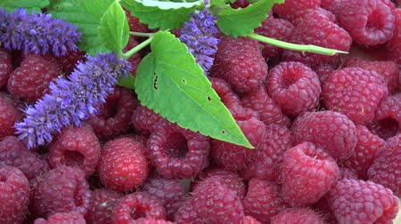 homeopathic : Rotating fresh raspberries and medical anise hyssop Agastache foeniculum flowers background
