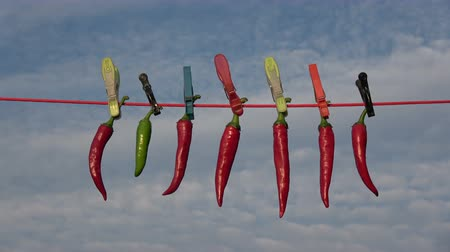 ruhacsipesz : Hang drying fresh red hot chili peppers on string with clothespins on sky background